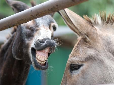 Foto de Funny Laughing Donkeys - Imagen libre de derechos