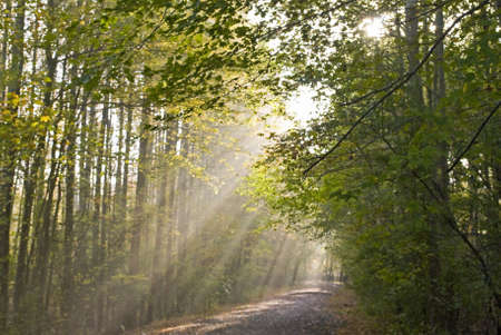 Light beams stream through the trees on this path in Manasquan Reservoir County Park in Central, New Jersey.