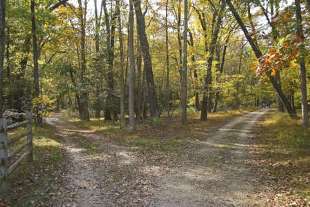 This is an Autumn shot of two hiking trails at Allaire State Park in New Jersey.