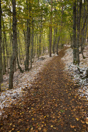 path of a forest in autumn