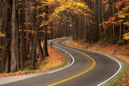 S-curve in a mountain roadway that goes through the forest,  shot in the Great Smokey Mountains during fall leave changes