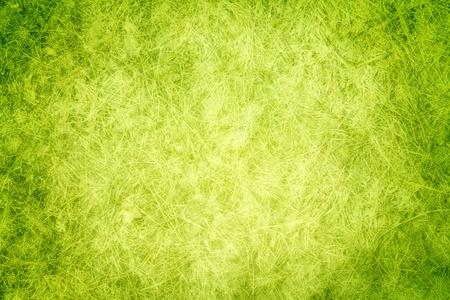 Green texture grass