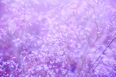 purple background with small flowersの写真素材