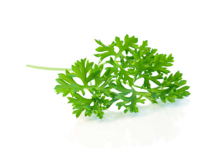 Parsley leaves isolated on white.