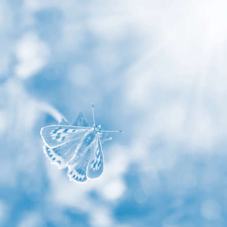 Butterfly Sunlight on blurred blue background  Symbol of fragility and tenderness