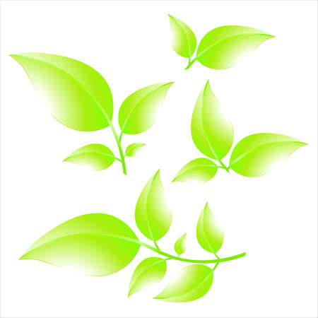 Illustration for Collection of green branches isolated on white background. Summer leaves. Vector illustration - Royalty Free Image