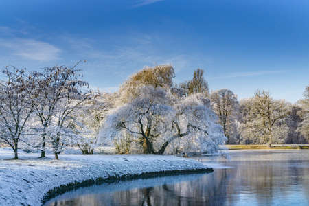 Photo pour The branches of a tree rise in the semi-frozen lake, the trees are covered with snow, clittering cold, sunshine, and blue sky - image libre de droit