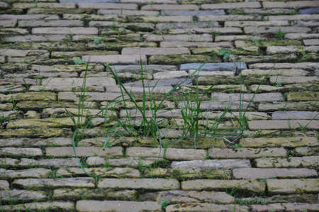 Photo for A ground level view of an uneven old cobbled road. The disused road has grass growing in between the moss covered stones.  - Royalty Free Image