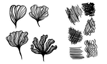 Illustration pour Silhouette of hand drawn flower petals. Line art vector illustration. Botanical sketch isolated on white background. Collection of elements for greeting card, poster or wedding invitation design - image libre de droit