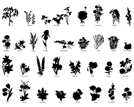 Illustration for Collection of different garden vector silhouettes of plants - Royalty Free Image