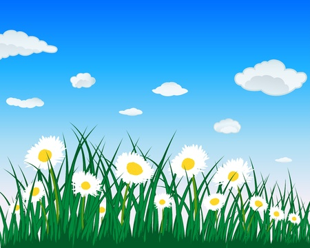 Meadow background with camomiles. All objects are separated. Vector illustration.