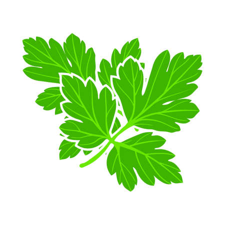 Illustration for Parsley Icon. Flat Color Design. Vector Illustration. - Royalty Free Image