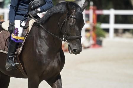Equestrian jump.
