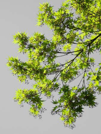 Branche d arbre sur fond gris
