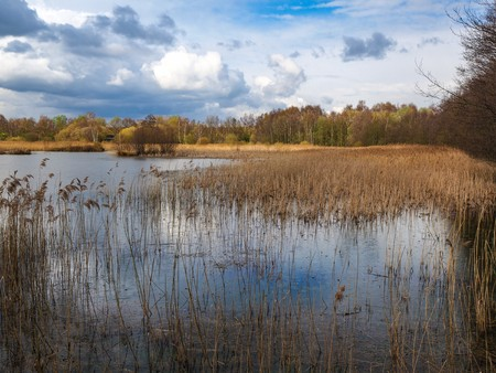 Wetlands and reeds at Potteric Carr nature reserve near Doncaster, South Yorkshire, England