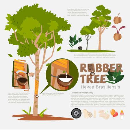 Ilustración de Rubber tree or Hevea brasiliensis with detail infographic elements.Milk of rubber tree. benefit. prodcut from rubber. - Imagen libre de derechos