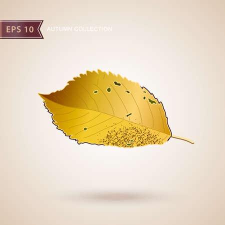 Autumn falling leaves. Leaf fall. Autumn design. Vector illustration