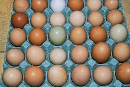 Organic colorful chicken eggs in a egg carton. These eggs were produced in small batches by a different types of chicken so they appeared in different colors, patterns, and sizes.