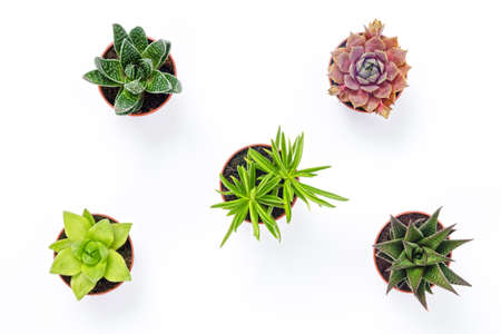 Photo for Mini succulent plants isolated on white background. Contemporary decor. - Royalty Free Image