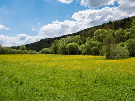 Photo pour Landscape is blooming in the spring - image libre de droit