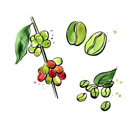 Illustration pour Vector illustration of super food Green coffee. Organic healthy dietary supplement. Black outlines and bright colorful watercolor stains, splashes and drips. Isolated on white background. - image libre de droit