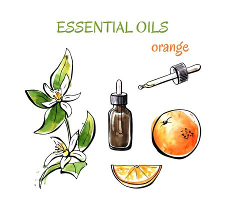 Ilustración de Vector illustration of orange essential oils. Branch with flowers, fruits, flasks and bottles. Set of hand drawn watercolor objects isolated on white background. - Imagen libre de derechos
