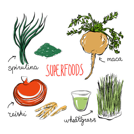 Illustration pour Set of vector doodle illustrations of the most popular super foods. Spirulina, reishi mushroom, wheatgrass, peru maca. Color hand drawn objects isolated on white background. - image libre de droit