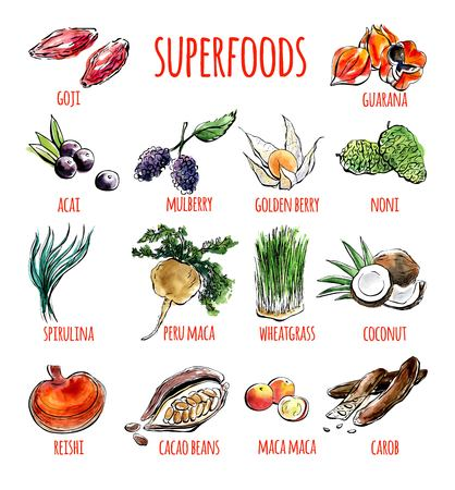 Illustration pour Big set of vector doodle illustrations of the most popular super foods. Collection of hand drawn fruits, plants and berries with black outline and watercolor stains isolated on white background. - image libre de droit