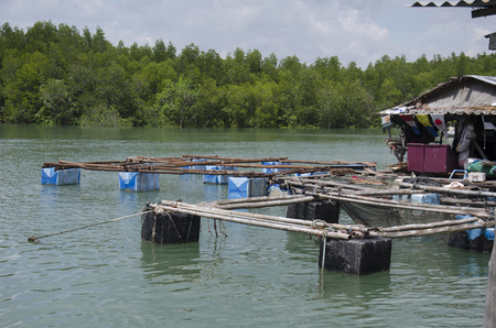 Fishes underwater fish cage farming or cultured fish in net cages on the sea near Bang Rong Pier in Phuket, Thailand