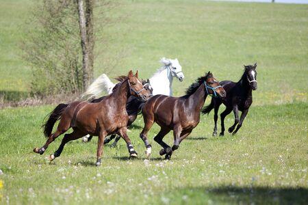 Photo pour Horse gallop free outside on meadow - image libre de droit