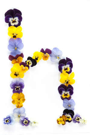 letter h alphabet made from pansy flowers isolated on white background