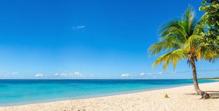 Amazing sandy beach with coconut palm tree and blue sky, Caribbean Islands