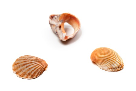 Seashells and broken rapana isolated on white background. Selective focus.