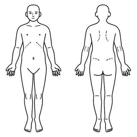 Ilustración de Human body front and back - Imagen libre de derechos