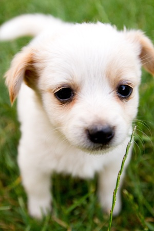 Photo for Brown and white puppy in the grass - Royalty Free Image