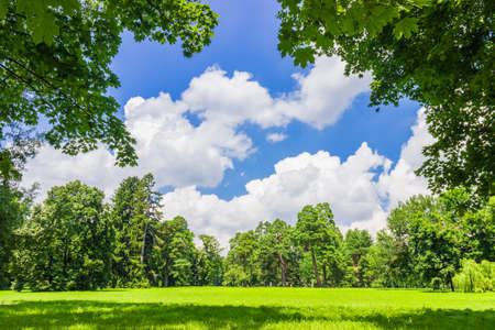 Large clearing in the park among the conifers and deciduous trees on the background of the sky with clouds