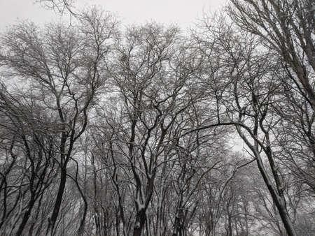 Photo pour Winter in the park landscape Nature background - image libre de droit
