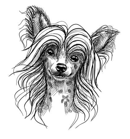 Illustration pour Portrait of a small dog, a Chinese crested puppy. Hand-drawn sketch with black and white pen, realistic vector illustration. Isolated background. - image libre de droit