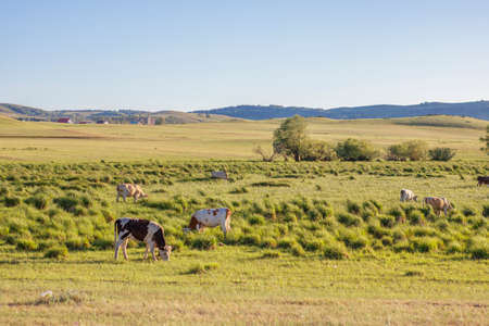 Photo for Pasture for cows. Green meadows and hills with meadow grass - Royalty Free Image