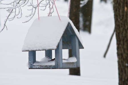 Wooden feeding Trough for birds hanging on tree in winter