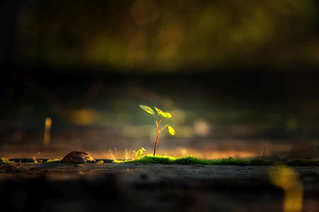 Photo for Small plant in the sunlight nature background - Royalty Free Image