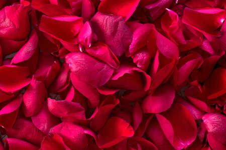 Photo pour Pile of red rose petals background texture, romantic nature concept close-up - image libre de droit