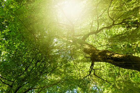 Photo pour Beautiful sunny spring and summer nature, trees in park and outdoor landscape scene - image libre de droit