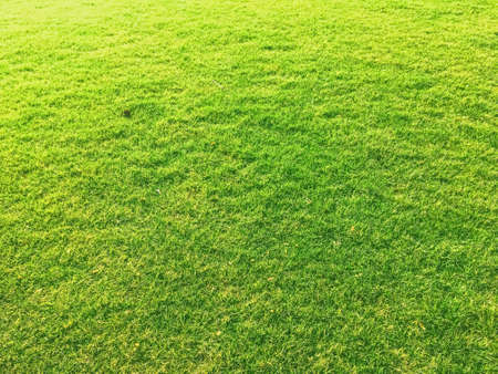 Foto de Green grass lawn as background, nature and backyard - Imagen libre de derechos
