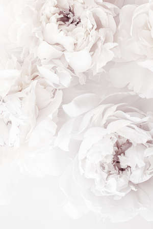 Photo for Pure white peony flowers as floral art background, wedding decor and luxury branding design - Royalty Free Image