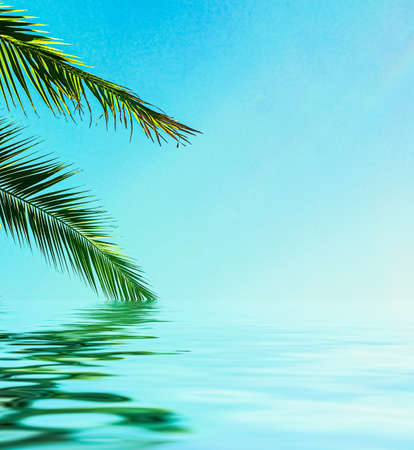 Photo pour Palm tree leaves and sea water, summertime travel and beach background - image libre de droit