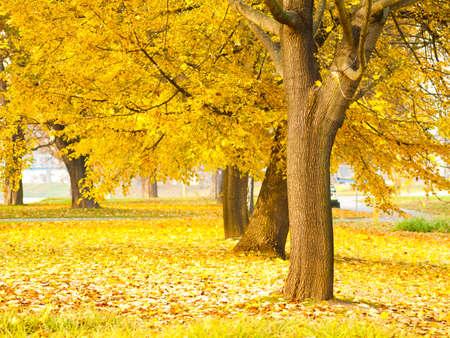 Foto de fall leaves trees  - Imagen libre de derechos