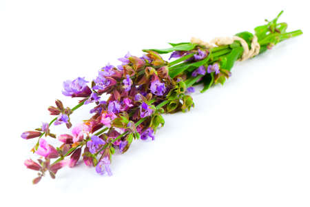Bunch of flowering sage, over white background