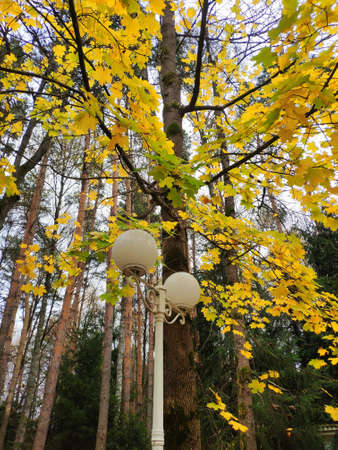 white round street lamp on the background of bright yellow autumn leaves in the park. Autumn parkの素材 [FY310158713258]
