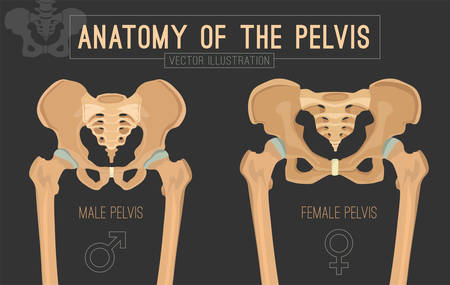 Ilustración de Male vs female pelvis. Main differences. Detailed vector illustration isolated on a dark grey background. Medical and anatomical concept. - Imagen libre de derechos